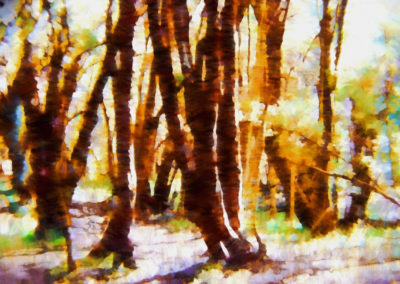 FOREST473